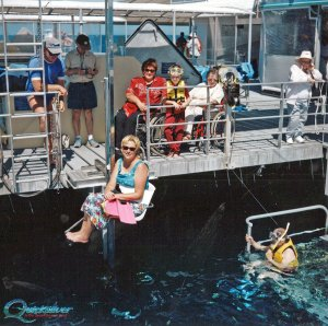 Great barrier reef with wheelchair
