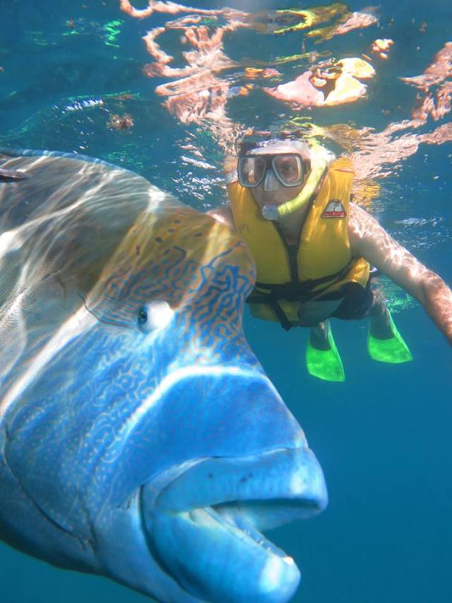 Port Douglas Info Holiday Packages Amp Tours Quicksilver