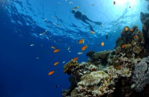 Dive Expeditions from Cairns