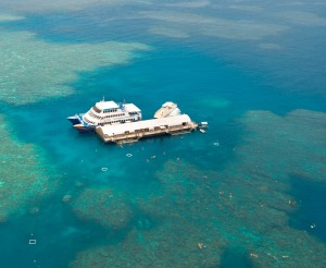Pontoon Reef Tours from Cairns