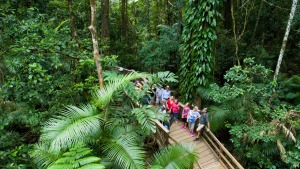 Cape Trib Day Tour from Cairns