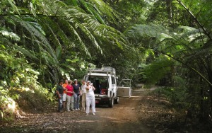 Dpaintree Rainforest Tours from Cairns