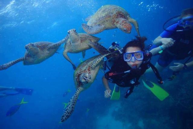 Fitzroy Island Resort Snorkeling