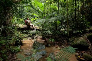 Ferns in the Daintree Rainforest