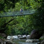 The Daintree Rainforest - Mossman Gorge