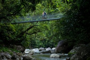 Mossman Gorge Bridge