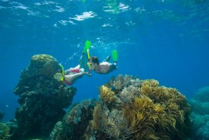 Great Barrier Reef Snorkelling from Port Douglas