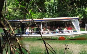 Daintree River Cruise